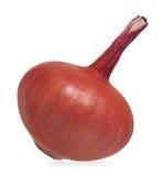 One gold onion Stock Photos