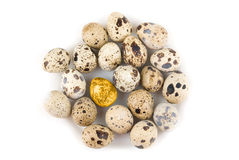 One Gold quail egg Royalty Free Stock Photography