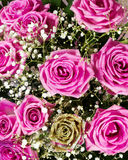 One gold and vibrant pink roses flower bouquet Royalty Free Stock Image