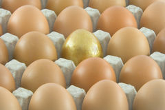 One golden egg with many ordinary eggs. One golden and many ordinary fresh rural eggs packed into cardboard container Royalty Free Stock Photography