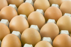 One golden egg with many ordinary rural eggs. One golden egg with many ordinary fresh rural eggs packed into cardboard container Stock Photo