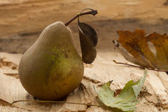 One Golden Pear on wooden background. Autumn still life royalty free stock photo