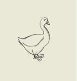 One goose  image. Stock Image