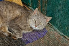 One gray cat lies and looks on the street stock photo