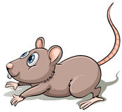 One gray mouse Stock Photography