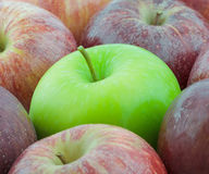 One green apple Stock Image