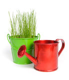 One colored bucket with grass and red water can. One green bucket with grass and one red water can on a white background. Buckets and can made of metal Royalty Free Stock Images