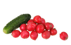 One green cucumber and group of red garden radish. Royalty Free Stock Image