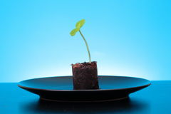 One green fresh sprout Stock Photo