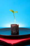One green fresh sprout Royalty Free Stock Photo