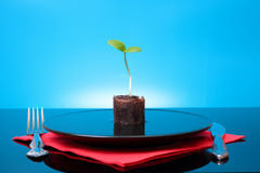 One green fresh sprout in plate with water Royalty Free Stock Photography