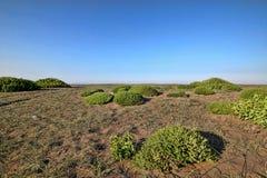 Green islands in coastal sand, Greece. One Green islands in coastal sand, Greece Royalty Free Stock Photography