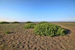 Green islands in coastal sand, Greece. One Green islands in coastal sand, Greece Stock Image