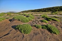 Green islands in coastal sand, Greece. One Green islands in coastal sand, Greece Royalty Free Stock Images