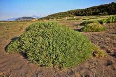 Green islands in coastal sand, Greece. One Green islands in coastal sand, Greece Royalty Free Stock Image