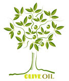 One green, isolated, olive tree with twigs with Royalty Free Stock Photo