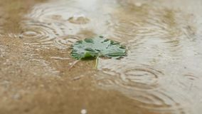 One green leaf in a pool of water under a warm summer rain. slow motion stock footage