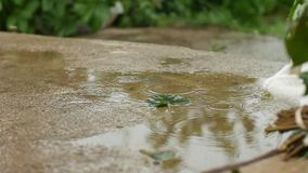 One green leaf in a pool of water under a warm summer rain. slow motion stock video