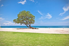 One green tree on the beach. One green tree growing on a deserted beach Royalty Free Stock Image