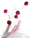 On one hand, cherries in the water  Isolated on white Stock Photo