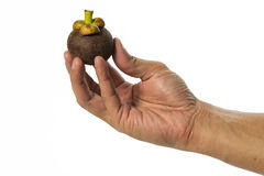 One hand hold one fresh mangosteen isolated on white background Royalty Free Stock Photography