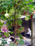 Happy family and cucurbits. One happy family sit under the cucurbits. In chinese ancient village. Taken on Chongqing of China Stock Photo