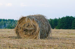 One haystack in meadow grass Stock Photo