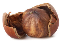 One hazelnut Stock Photos