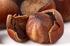 One hazelnut Stock Image