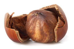 One hazelnut Stock Images