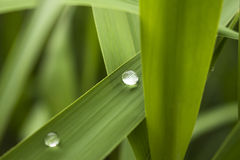 Water drop on green leaf,zen. A water drop on the fresh leaf after rain,close-up stock images