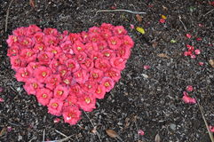One heart-shape made by flowers, Stock Images