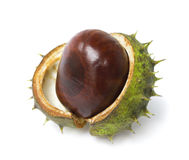 One horse chestnut lie on white Stock Photo
