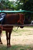 One horse on a farm. Stock Photo