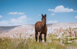 Free One Horse Over Cappadocia Summer Landscape, Turkey Royalty Free Stock Image - 130384706