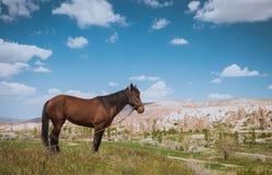 One horse over Cappadocia summer landscape, Turkey royalty free stock photo