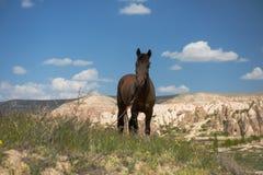 One horse over Cappadocia summer landscape, Turkey stock images