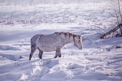 One Horse stay in the snowy woods in winter Stock Photos