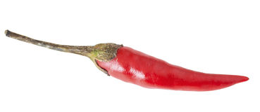 One hot pepper Royalty Free Stock Photo