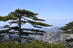 One Of Huangshan royalty free stock images