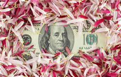 One hundred dollar banknote Royalty Free Stock Photo