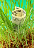 One Hundred dollar bill growing in th Stock Photography