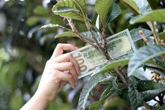 One hundred dollar bill on tree Stock Photos