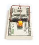One Hundred dollar mousetrap Royalty Free Stock Images