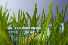 One hundred dollars bills in green grass. Growth of investment. Financial concept Stock Image