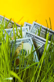 One hundred dollars bills in green lawn. Royalty Free Stock Photo