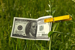 One hundred dollars. Fixed on a sprout with a clothespeg Stock Image