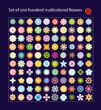 One hundred multicolored flowers Stock Image