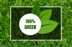One hundred percent green design Royalty Free Stock Photo