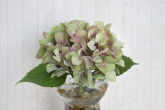 One hydrangea flower in a glass bowl Stock Photography